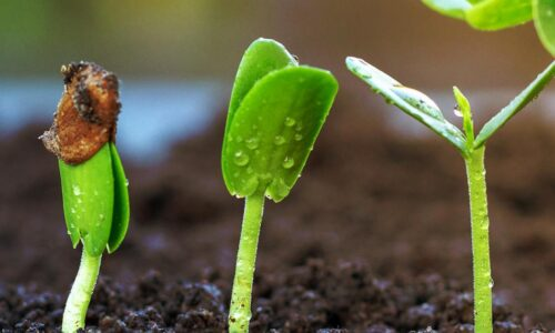 SCIENCE BIOLOGY SEEDS AND PLANT GROWTH